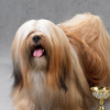 Jeddah's criminal court clears dog beauty pageant organizers