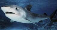 Shark kills teenager as parents watch