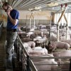 From bad to worse': tariff-hit US farmers urge Donald Trump to settle trade war Calls from agricultural groups to break stalemate through deals with China and Mexico or prioritising markets elsewhere Pig farmers push for speedier settlement while soybean farmers have 'no hope of making any money'