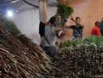 Khat is big business in Ethiopia and Around 90 percent of adult males in Somaliland chew the narcotic plant khat