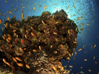 Ocean's Oxygen Starts Running Low Rising levels of CO2 are making it hard for fish to breathe in addition to exacerbating global warming and ocean acidification By Niina Heikkinen